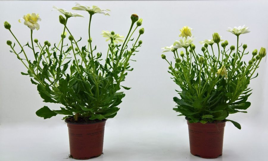 Compacte planten