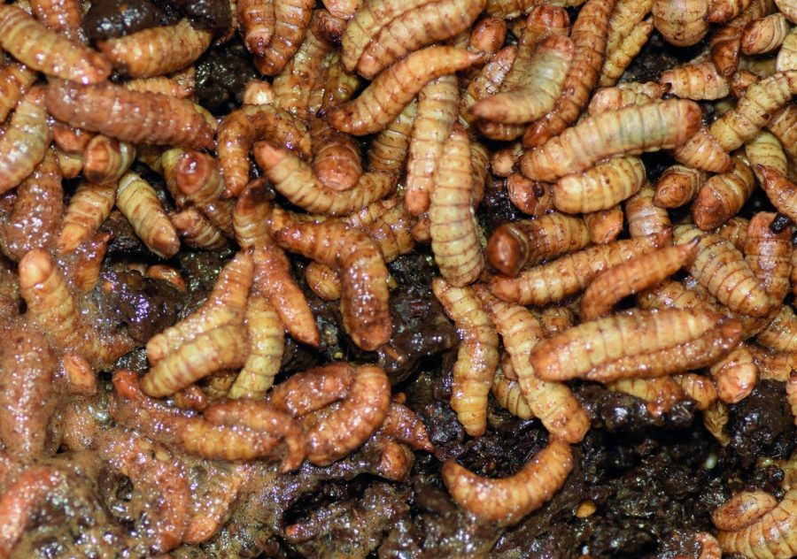 larven